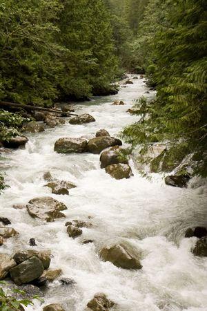 A raging river rushing through a green gorge 版權商用圖片