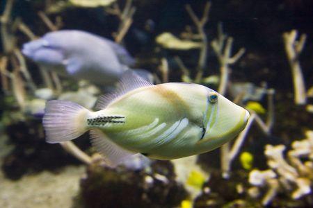 aquarium hobby: A brightly colored tropical fish in an aquarium