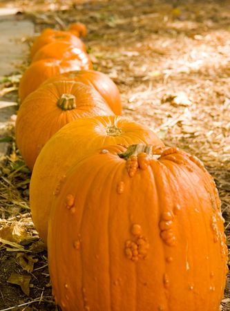 Image result for row of pumpkins by size