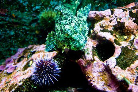 A green mottled tropical fish in an aquarium Banco de Imagens