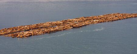 Honderden logs in een zaaghout operatie drijvend op de rivier