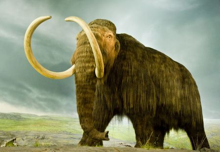 A giant woolly mammoth in a museum Фото со стока