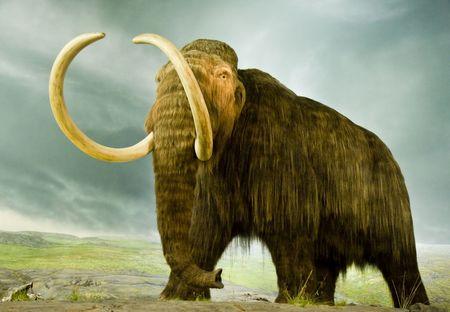 Een reus wollige mammoet in een museum