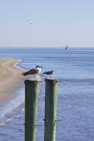 shrimp boat: Seagulls on two posts with a shrimp boat in the background
