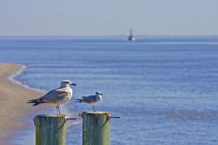 Seagulls on two posts with a shrimp boat in the background photo