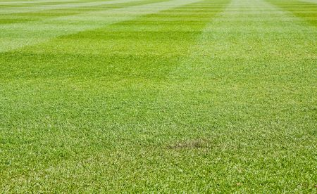 fescue: Fresh Cut green grass on a new baseball field Stock Photo
