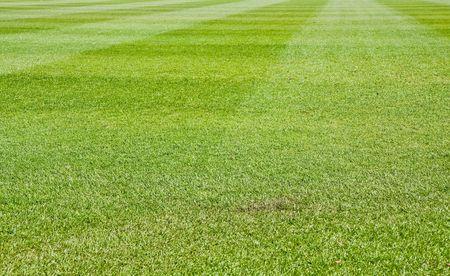 fescue: Fresh Cut green grass on a new baseball field Stock Photo