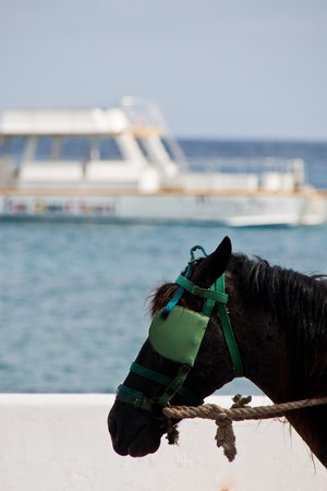 blinders: A horse wearing blinders by the sea with boat in background Stock Photo