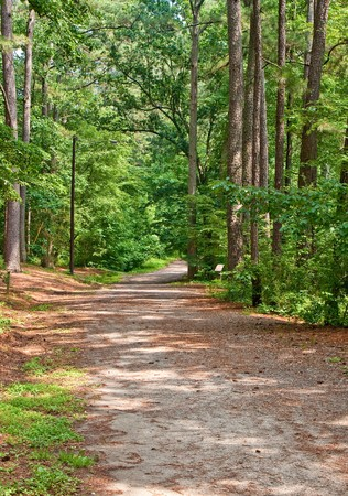 A wide walking path through a lush green forest Stock Photo
