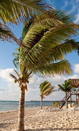 A palm tree blowing in the wind on a beach with a thatch hut lifeguard hut in background Stok Fotoğraf