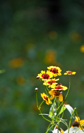 greem: Brilliant Yellow and Red Flowers against a greem meadow
