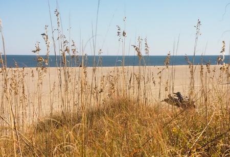 sea oats: Blue sea under a blue sky and a beach beyond sea oats