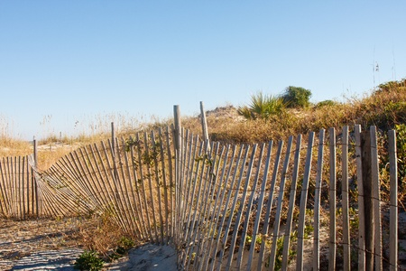 sawgrass: Wood fence by sand dunes on a beach under clear blue skies