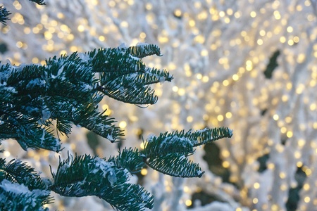 A fir tree with snow and white christmas lights in background Stock Photo