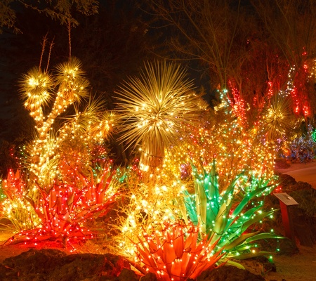 A desert garden at night with Christmas lights