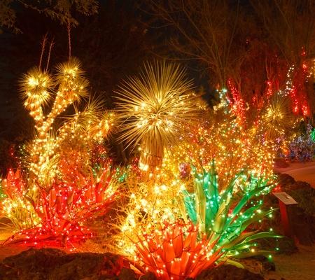 Een woestijn tuin 's nachts met kerstverlichting Stockfoto