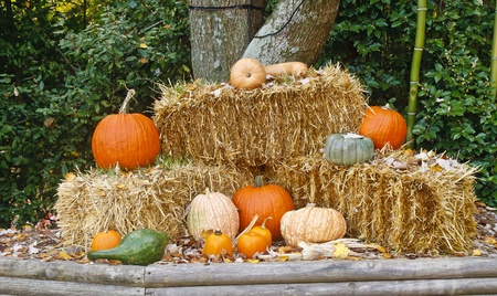A fall display of pumpkins on bales of hay photo