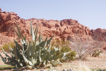 Green cactus in foreground with red rock hills in background Stock Photo - 13864403