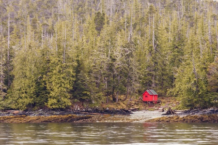 An evergreen forest on the edge of the water with a red cabin