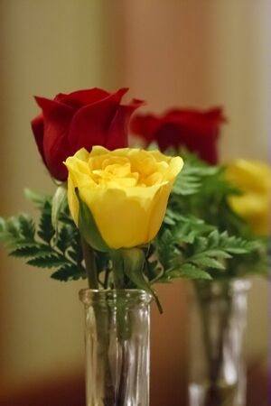 A yellow and a red rose in a vase reflected in a mirror