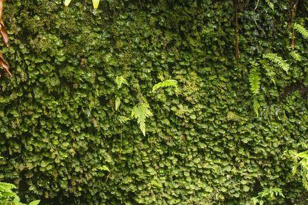 Lush green foliage in a rain forest jungle Stock Photo