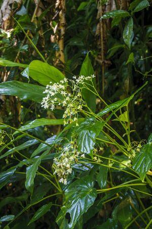 Wet foliage deep in a lush green rain forest