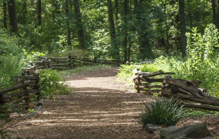 split rail: A wood chip trail between split rail fences in a lush green forest Stock Photo