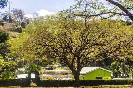 Enorme oude boom in een openbaar park en een helder groen gebouw