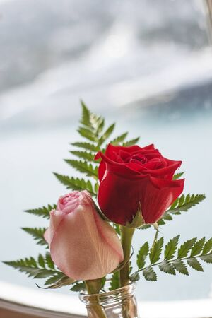 vase: A red and a pink rose in a vase with green fern Stock Photo