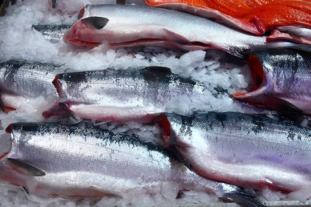 Fresh wild salmon whole and cleaned in a seafood market on ice Stock fotó