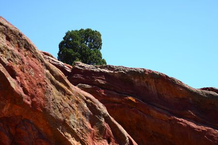 A single tree on a red rock hill under blue skies Stock Photo - 17382909