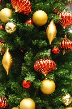 A christmas tree decorated with red and gold ornaments Stock Photo - 17501941