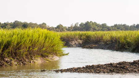 An oyster bed on a channel near a salt water wetland marsh