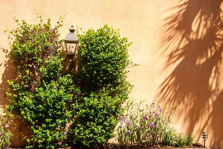 lampost: A planting of vines around an old lampost on an old brown stucco wall