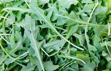 Fresh, green arugula leaves. Good for a background or textures