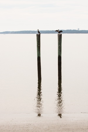 pilings: Pilings in a bay with seabirds roosting