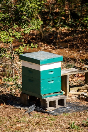A green and white bee house in a winter forest Stock Photo