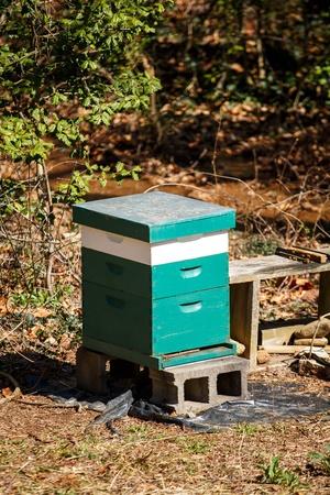Une maison d'abeille vert et blanc dans une forêt d'hiver Banque d'images - 19290166