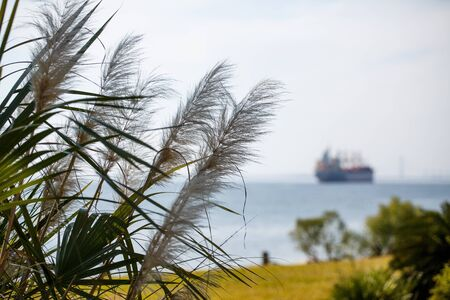 sea oats: An industrial dredging ship out of focus in background beyond coast and sea oats Stock Photo