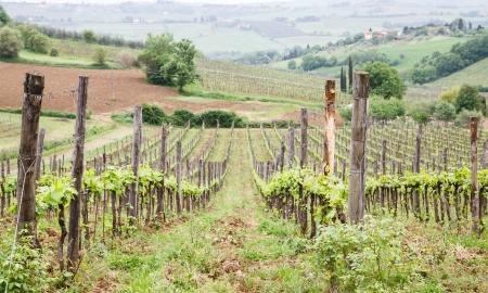 Een boerderij met een wijngaard en olijfbomen in de Toscaanse regio van West-Italië