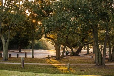 オークの木の公園の霧を通して輝く早朝の光