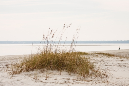 A patch of sea oats growing on a small sand dune on an empty beach Stock Photo