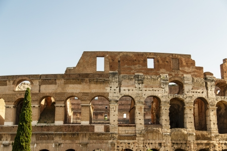 Walls of Roman Coliseum from Outside with a juniper tree Banco de Imagens