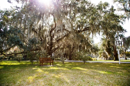 Sunlight shining through spanish moss in oak trees over a park and an empty bench photo