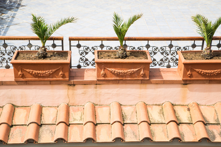 jardineras: Tres palmeras en maceteros de barro sobre un techo de tejas de arcilla