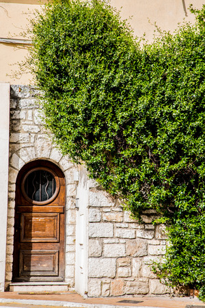 ivy wall: An old wood door in a stone wall with green climbing shrubs
