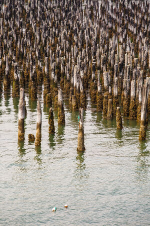 pilings: Old, mossy, wooden pilings in a calm northern harbor
