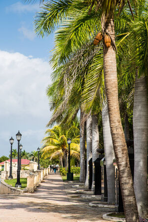 palm lined: A tropical sidewalk lined with palm trees Stock Photo