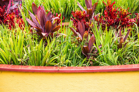 rain shower: A planter in a trropical garden after a rain shower