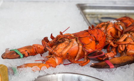 raw lobster: Fresh Maine lobster on ice in a market